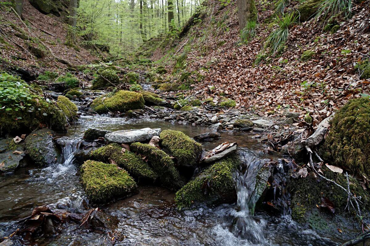 Kalksklinge in Hohenlohe Mainhardt