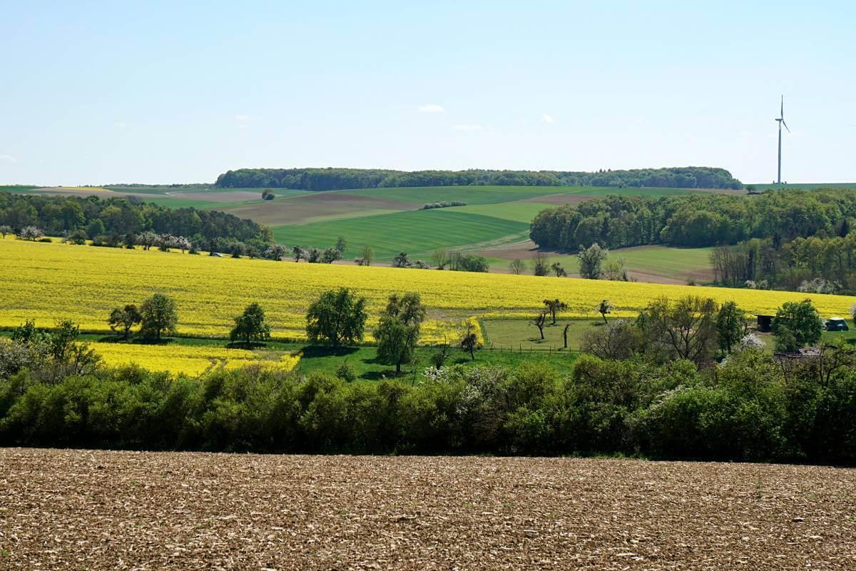 Landschaft in Hohenlohe auf dem Pfad der Stille mit Rapsfeld