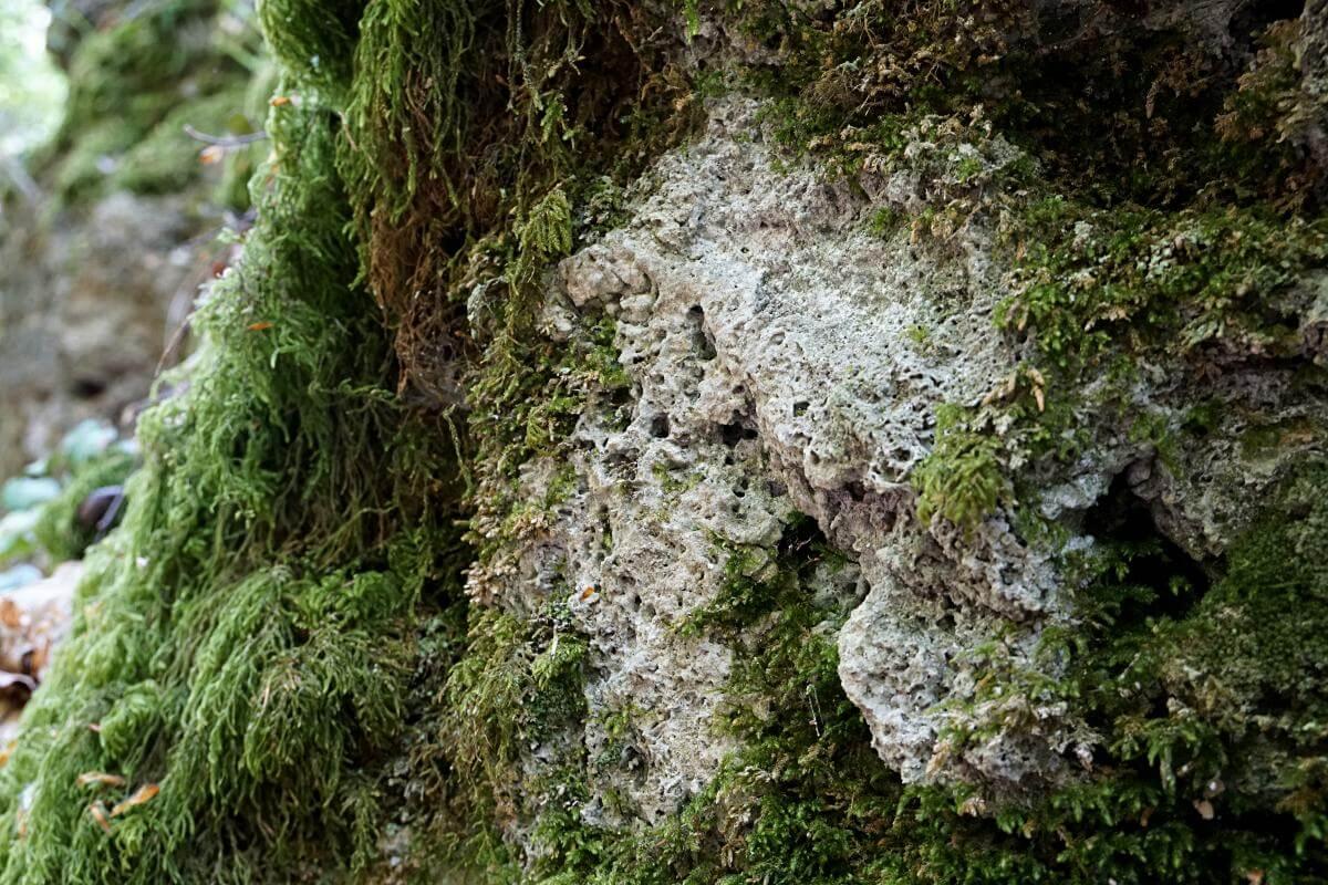 Kalktufffelsen in der Kalksklinge