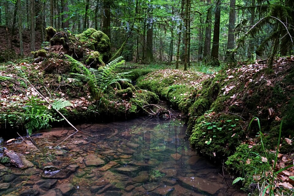 Tolle Natur auf dem Muehlenwanderweg im Schwaebischen Wald um Welzheim