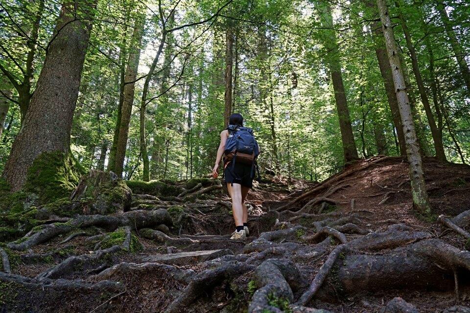 Aufstieg in die Brunnen und Haegelesklinge im Welzheimer Wald