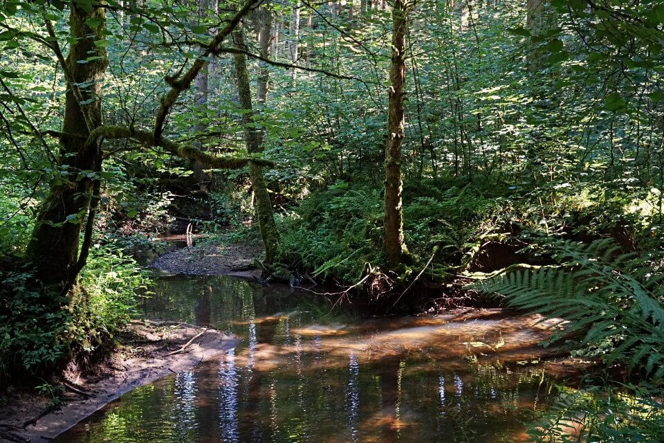 Die Finstere Rot am Rottalweg auf dem Muehlenwanderweg im Welzheimer Wald