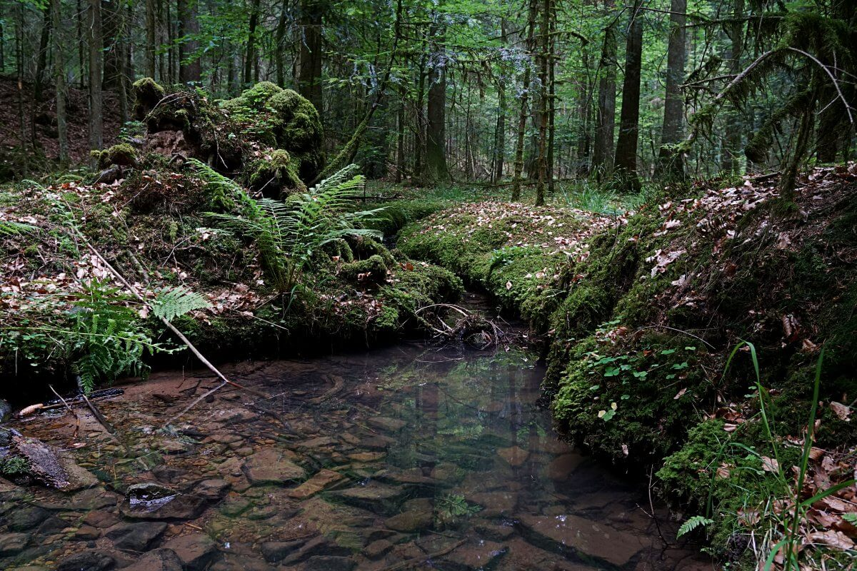 Natur im Schwaebischen Wald auf unserer Muehlenwanderung