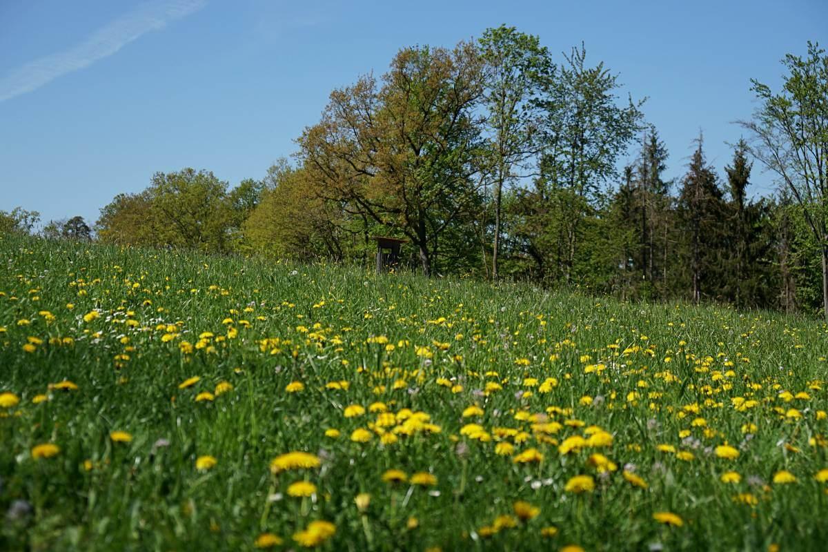 Wiese auf dem Pfad der Stille in Hohenlohe