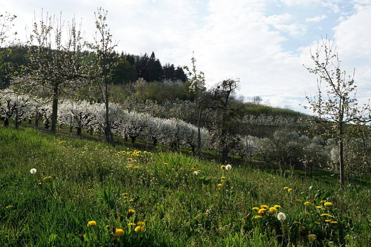 Wandern um Untersteinbach in Hohenlohe
