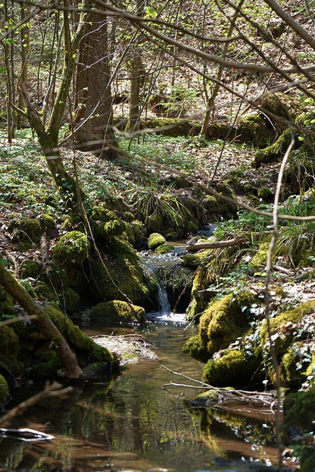 Durch den Wald in die Kalksklinge bei Untersteinbach