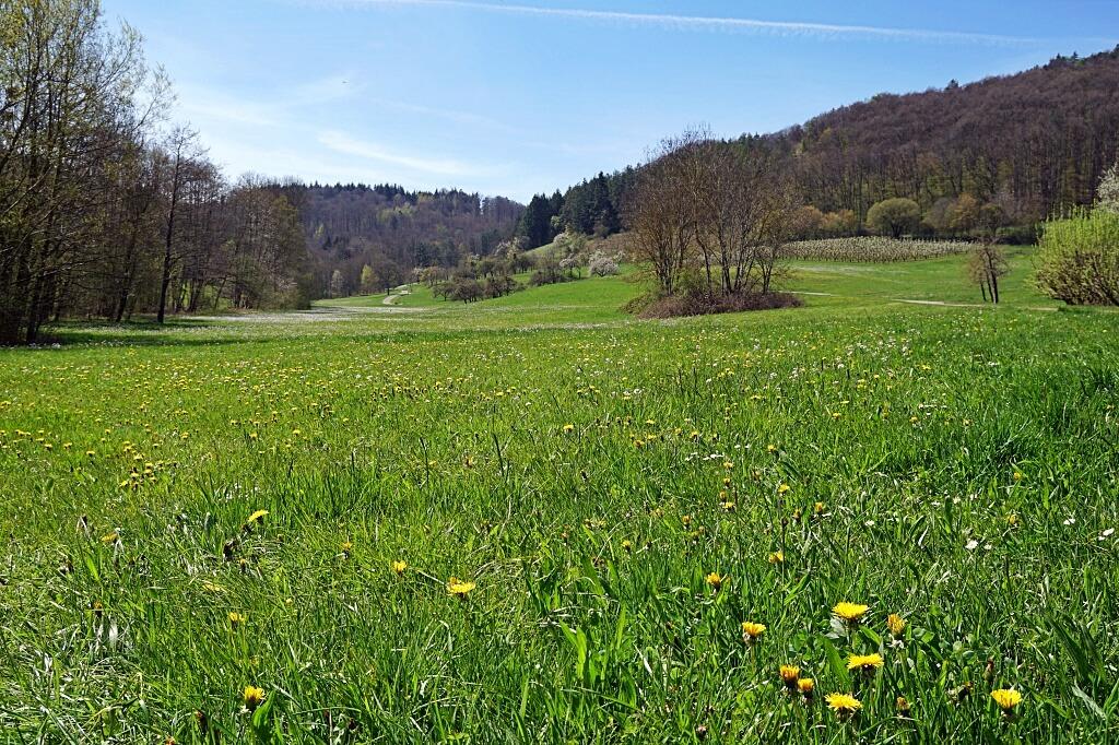 Das Steinbacher Tal im Fruehling