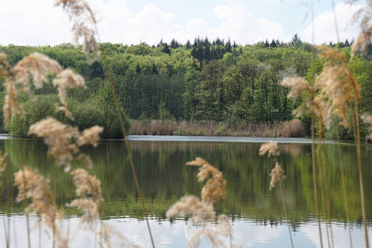 Der Gleichener See im Mainhardter Wald in Hohenlohe