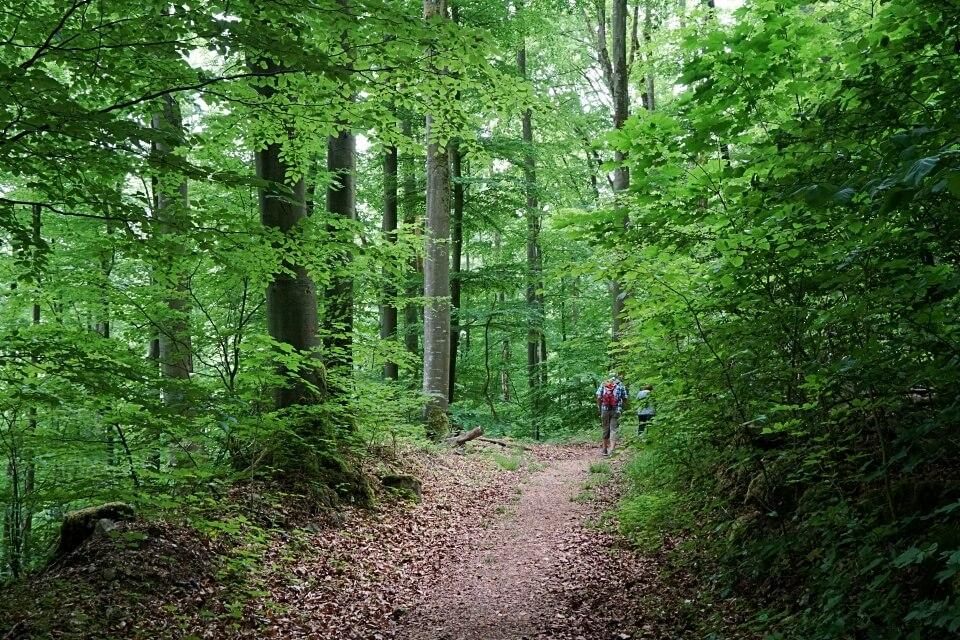 Wandern um Langenburg