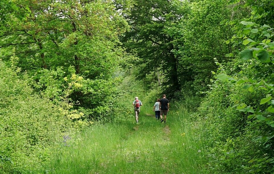 Wandern auf dem Panoramaweg Langenburg