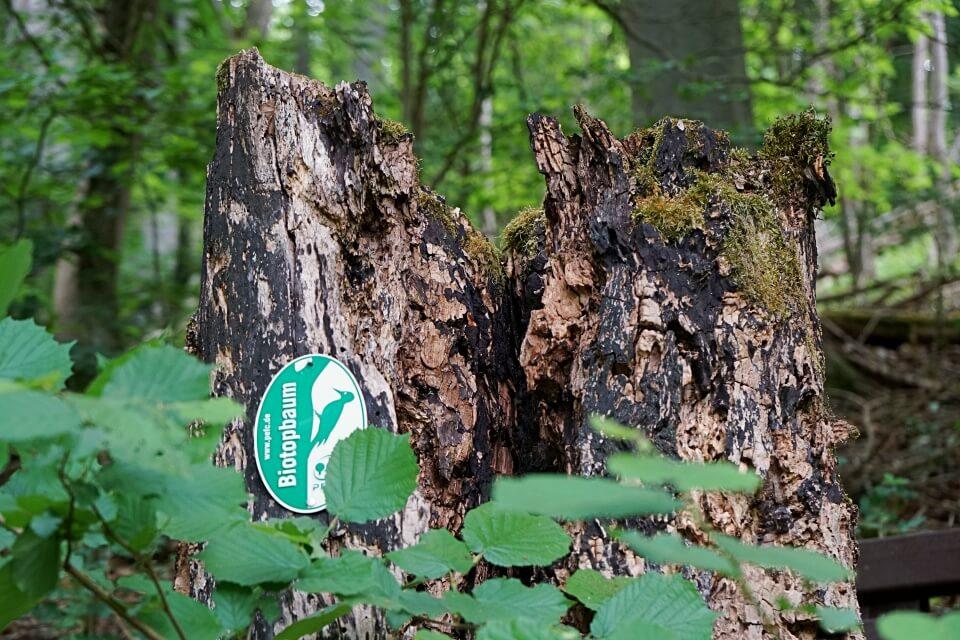 Totholz Biotop im Wald bei Langenburg