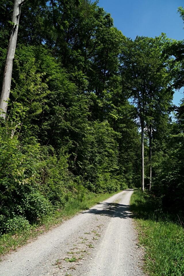 Waldweg in den Lowensteiner Bergen