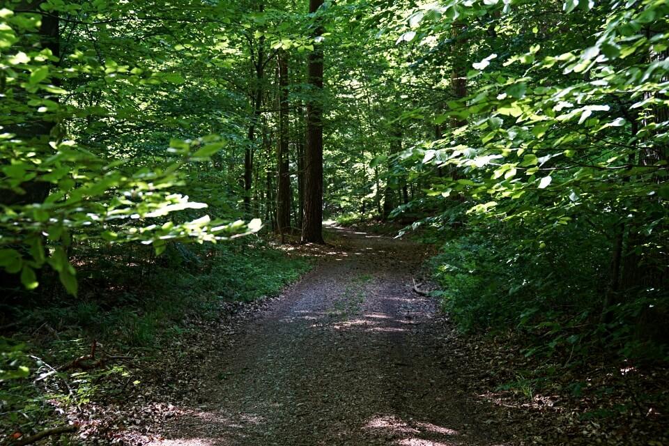 Wald Wanderweg in den Lowensteiner Bergen zwischen Lowenstein und Wuestenrot