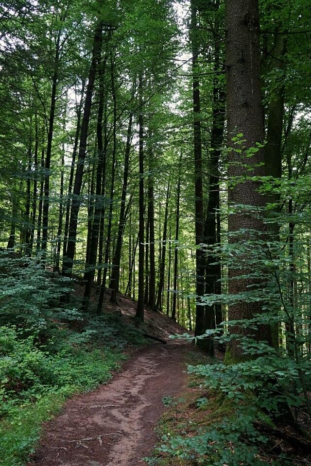 Waldweg auf der Wanderung durch die Bodenbachschlucht