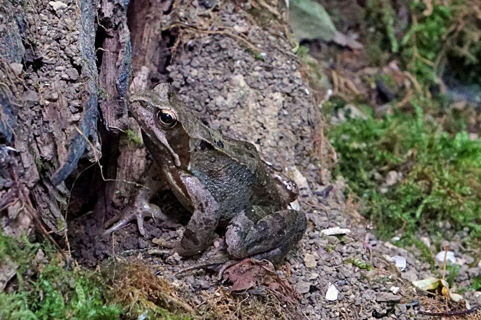Frosch im Jagsttal
