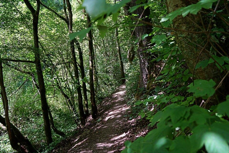 Tolle Pfade durch das Naturschutzgebiet Gronachtal in Hohenlohe