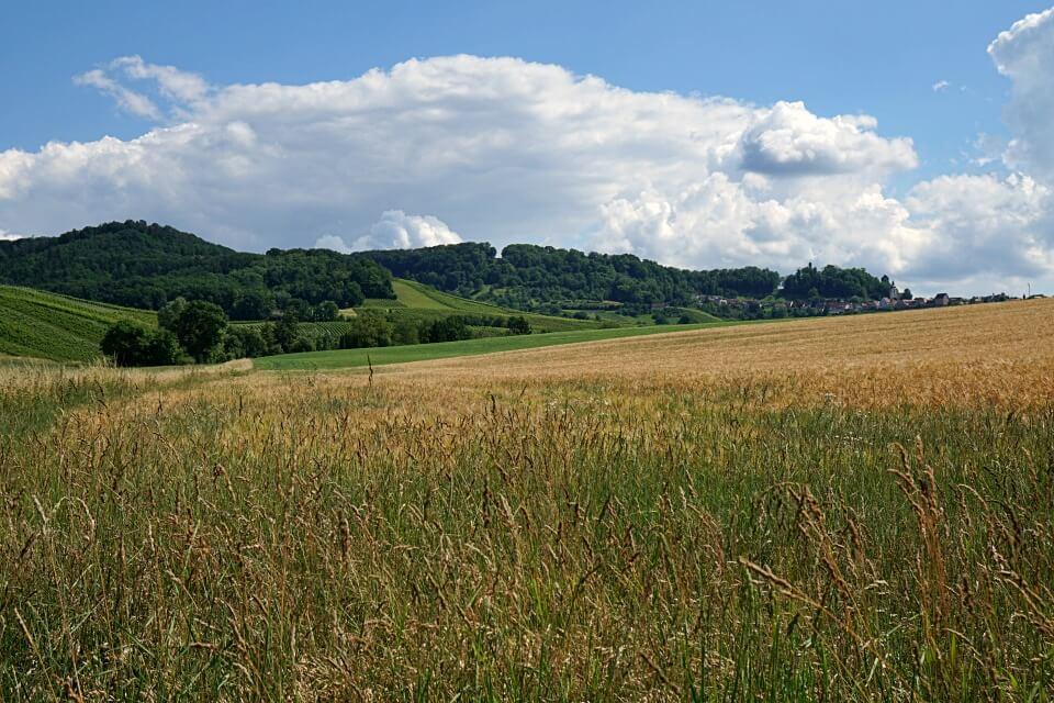 Sommerliche Felder auf dem Seerundweg um den Breitenauer See