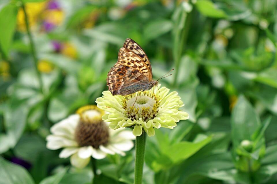 Schmetterling im Schlossgarten Weikersheim