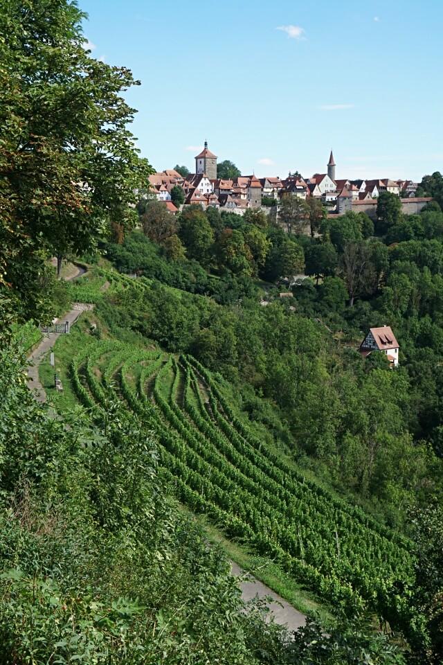 Die Rothenburger Riviera mit Weinberg An der Eich