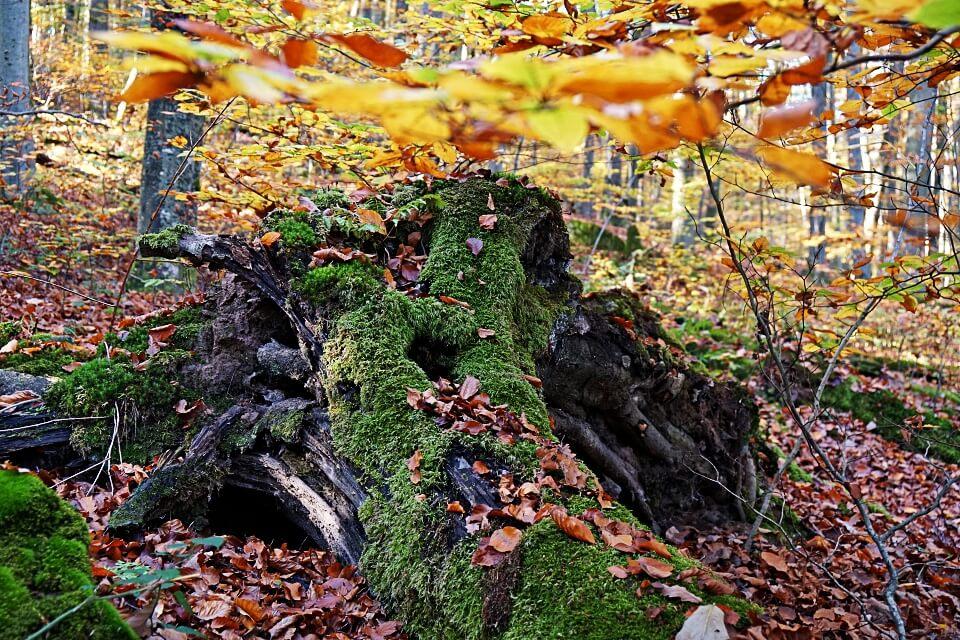 Herbst im Mainhardter Wald