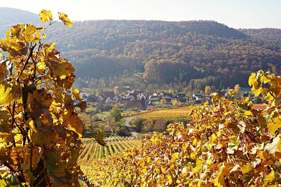Blick durch die Weinberge nach Geddelsbach