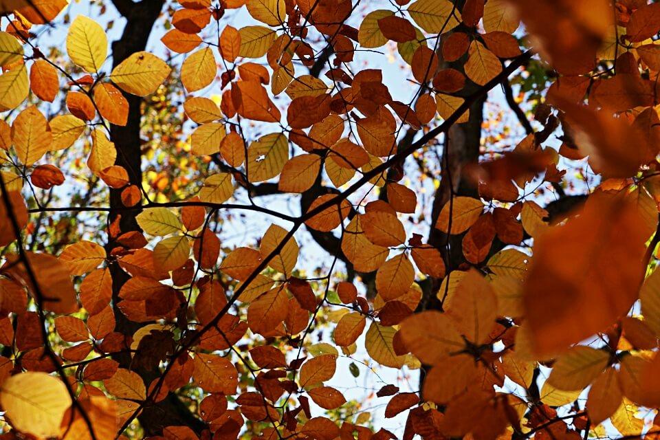 Herbstliche Wanderung im Mainhardter Wald von Geddelsbach zur Burg Maienfels und zum Gleichener See in Hohenlohe