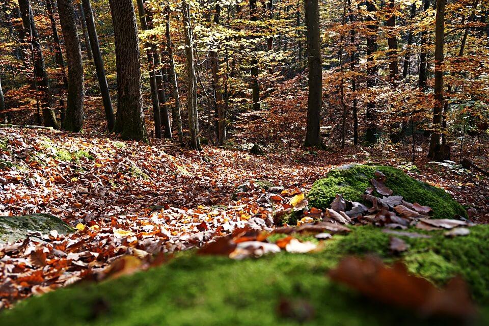 Wanderweg im Mainhardter Wald zur Burg Maienfels