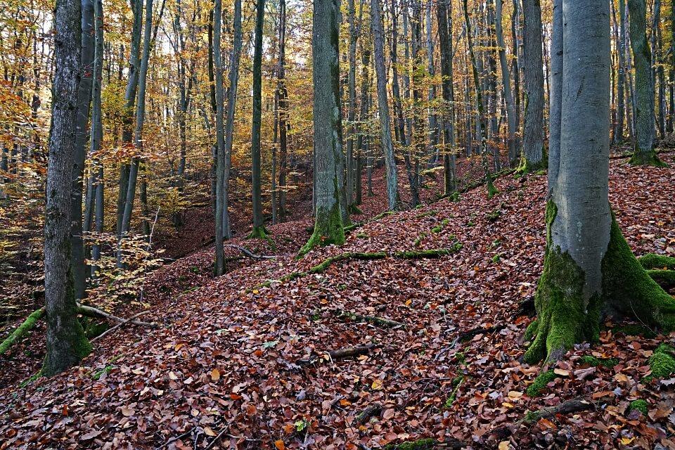 Wandern im Mainhardter Wald zur Burg Maienfels