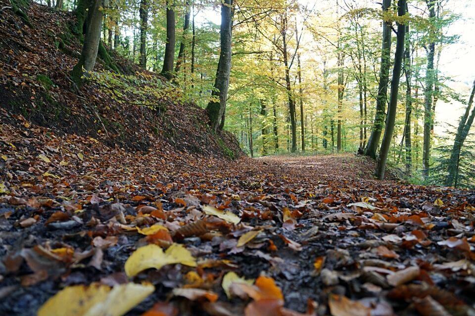 Auf Waldwegen von Tierberg nach Jungholzhausen in Hohenlohe