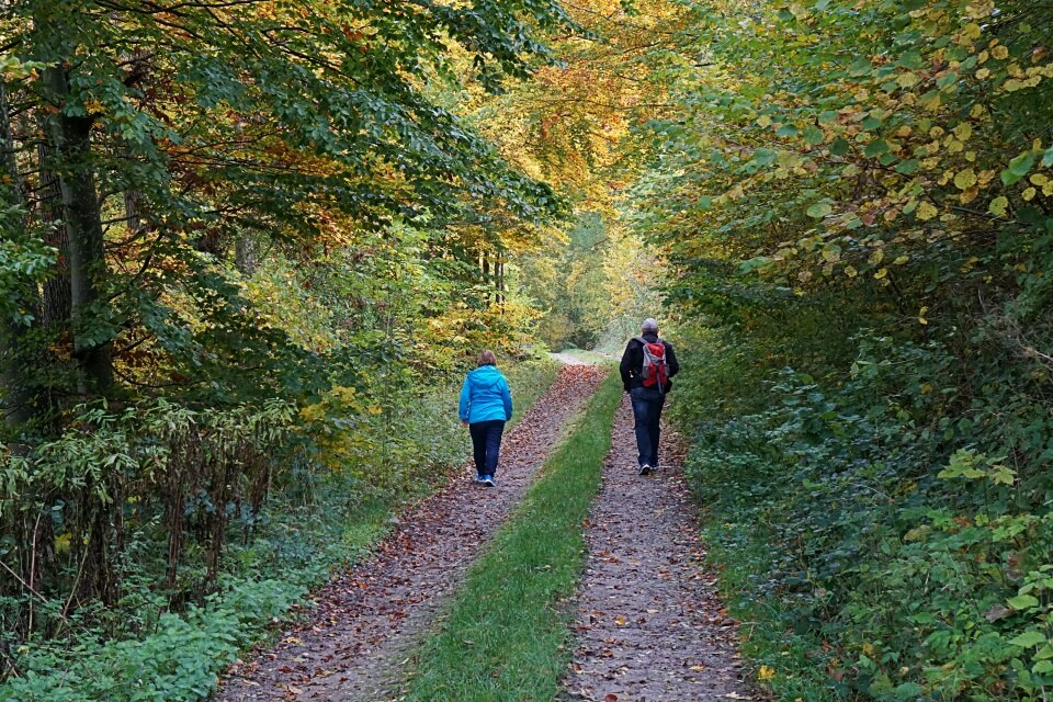 Waldweg zur Burg Tierberg in Hohenlohe