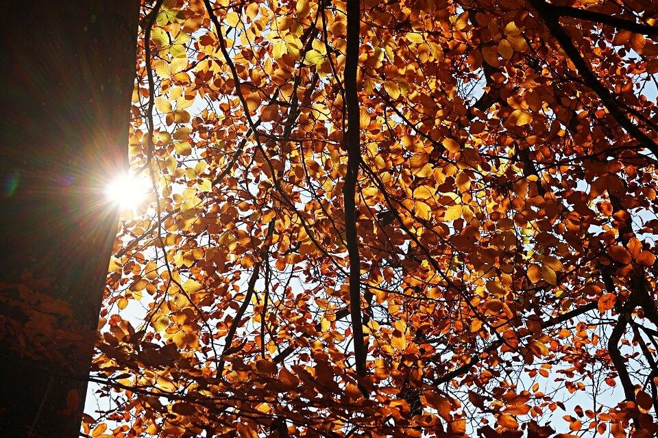 Sonne auf unserer Wanderung durch das Kupfertal