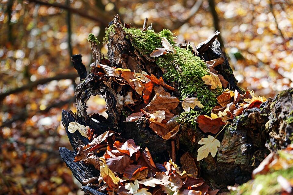 Herbst im Hohenloher Kupfertal bei Forchtenberg