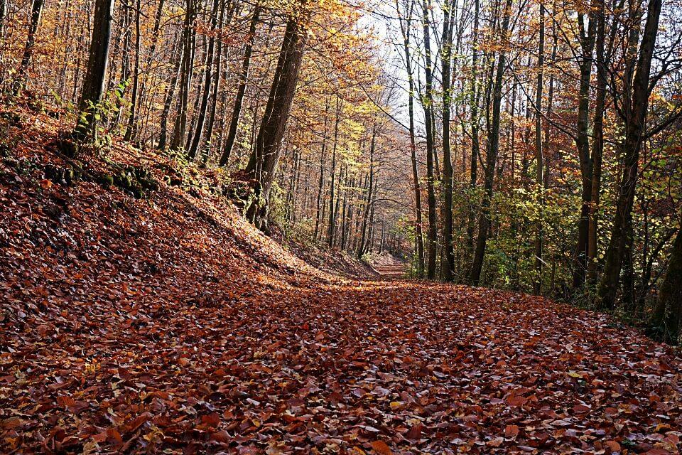 Waldweg im Kupfertal von Forchtenberg nach Hermersberg