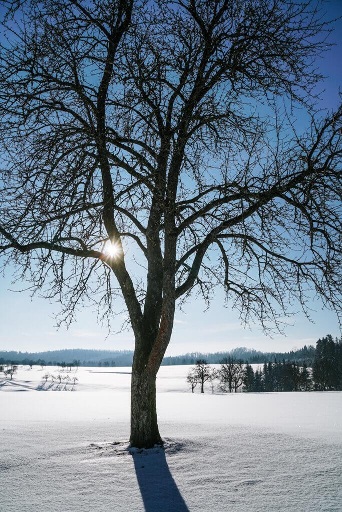Winterlandschaft bei Grosserlach Grab im Schwaebischen Wald
