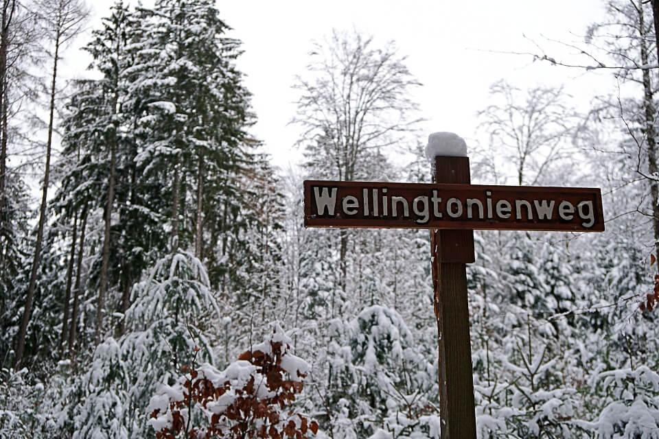 Der Wellingtonienweg zu den Mammutbaumen in Wustenrot