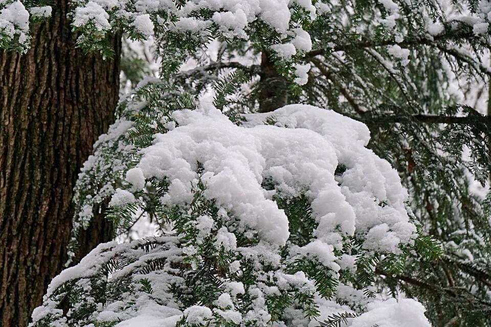 Winter und Schnee in den Lowensteiner Bergen im Schwabisch Frankischen Wald