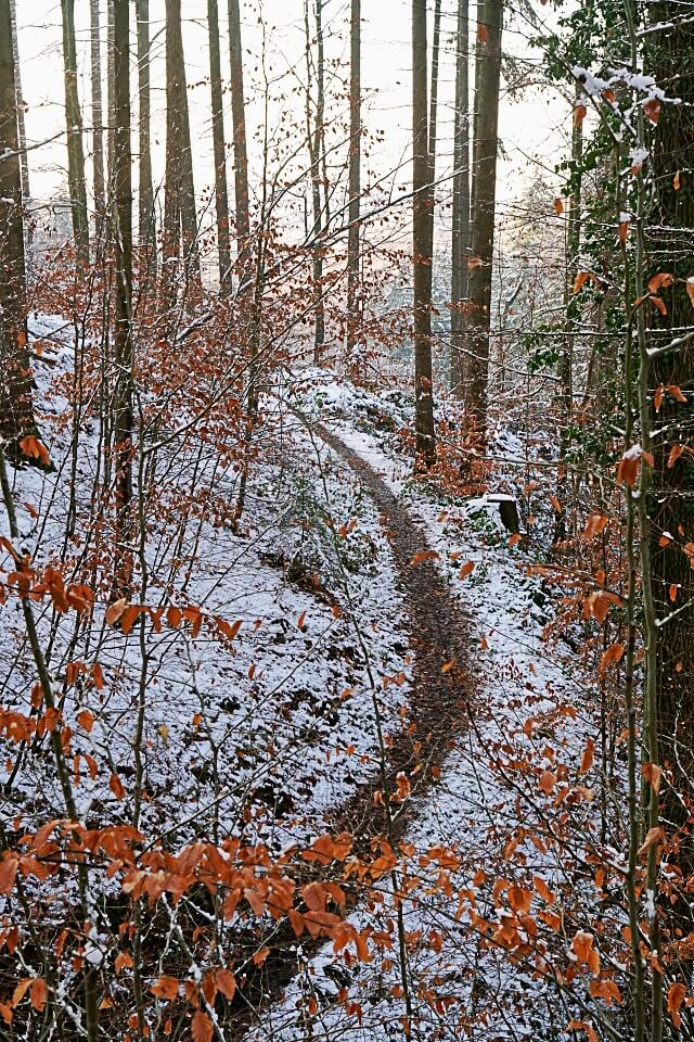 Schmaler Wanderweg durch die Pfaffenklinge in Wuestenrot