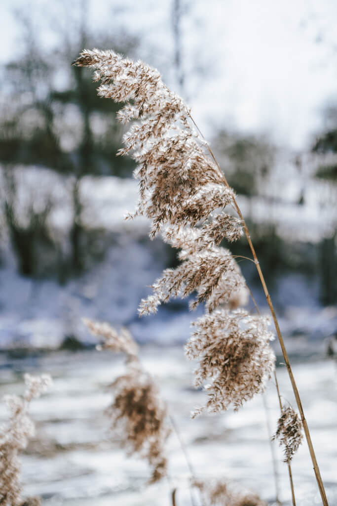 Winter an der Jagst in Hohenlohe