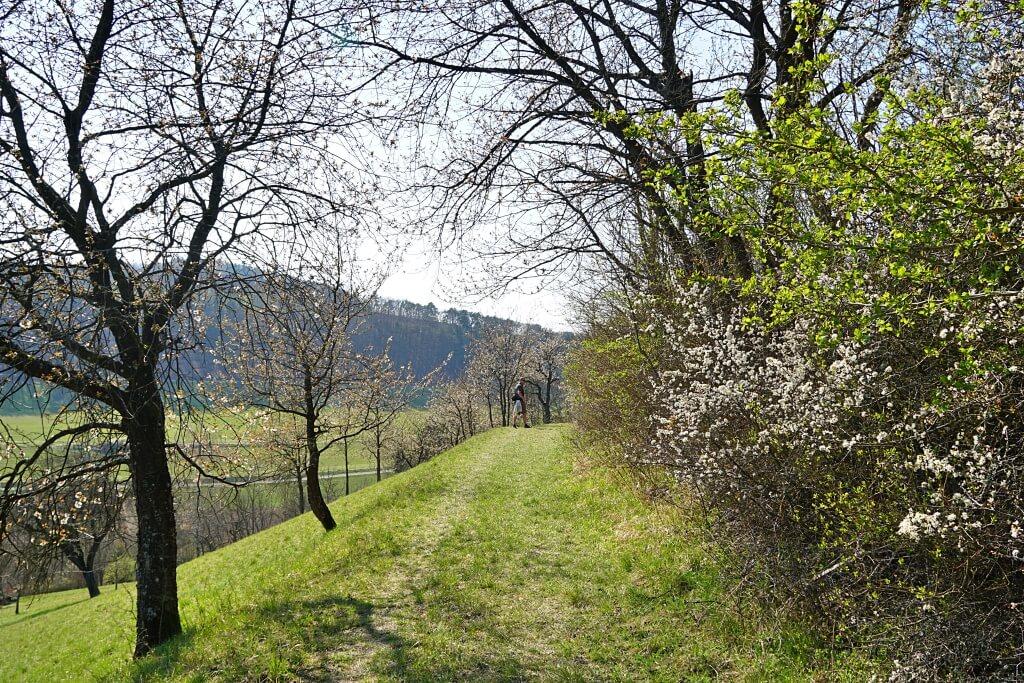 Wanderung Natura Trail Krautheim in Hohenlohe