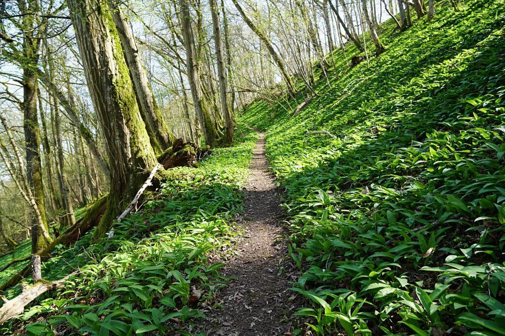 Pfad durch den Wald auf dem Natura Trail