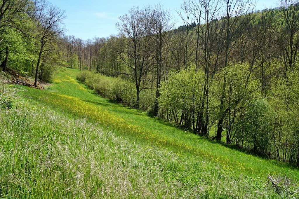 Wandern am Holderbach auf dem Pfad der Stille